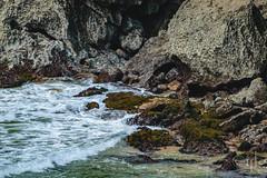 18092016DSC_1110.jpg (Ignacio Javier ( Nacho)) Tags: facebook gaviotas aves flickr pginafotografia faunayflora santander cantabria espaa es