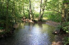 08-IMG_5089 (hemingwayfoto) Tags: bach brcke dssel facebookalbum fluss geologie laubwald naturschutzgebiet tal wald wanderung