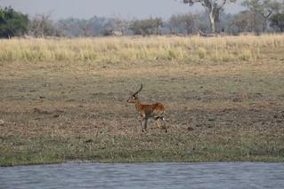 Namibia Dangerous Game Safari - Caprivi Strip 71