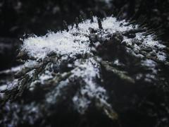 1173010_428987393966985_301737775_n (dragica_basaric) Tags: winter snow wonderland magic magical snowy flake nature green colours streets treet postcar postcards love train phot january 03 2016 photo photography d b danchy92 dragicabasaric lapovo serbia srbija srb sumadija dbphotography