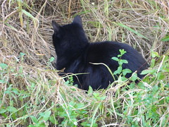 DSCN3961 (kriss_1905) Tags: gatti giardino riposo