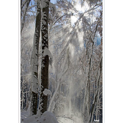 Schneevorhang (horstmall) Tags: schnee trees winter sun snow forest de geotagged soleil hiver arbres projection neige alb sonne wald bäume forêt avalanche projektion schwäbischealb oberlenningen winterwald albtrauf lenningertal lawinen jurajura jurasuabe tobeltal horstmall wielandsteine biosphärenparkschwäbischealb fallenderschnee stürzenderschnee geo:lat=4855453341475249 geo:lon=9492745399475098 sswabian alpsjura souabezwabische suabiaшвабска юраschwabenin jurašvapska jurasvafnesku alparnirjura szwabskasvabya alplerišvábská albaalpes suábiosшвабский альбšvabijos alpėsسوابی پعاڑschwabisk