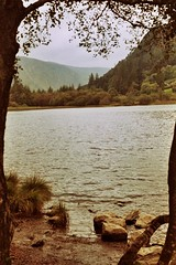 ---- (L'uomo Nell'Alto Castello) Tags: ireland lake tree film water montagne lago sand olympus pebbles hills glendalough roll om acqua zuiko analogica irlanda sabbia alber pellicola makinon ciottoli rullino