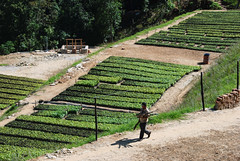 Raised Beds (LeftCoastKenny) Tags: plants garden bhutan electricfence raisedbeds mongar