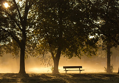No takers....... (Digital Diary........) Tags: trees mist fog bench mood empty freezing atmosphere suttonpark notakers