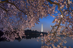 _DSC8612 (Timberography) Tags: pink monument sunrise cherry washingtondc dc washington spring blossom