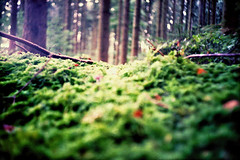forest focus - week 1/52 project (mikeasaurus) Tags: trees brown green forest germany bayern bavaria lomo lca xpro crossprocessed bokeh ct lomolca grn braun agfa wald bume baum 100asa 152 antseyeview precisa antsangle ratseyeview expired2005 autaut project52 october2012