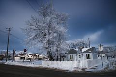Frosty (bryanscott) Tags: winter snow building architecture frost winnipeg hoarfrost manitoba hoar