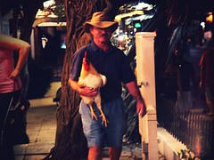 At night, streets are full of hens, roosters and cats  (WhishingOnAsTar!) Tags: chickens neon miami dolphins tropical greenery caribbean keywest hemingway roosters floridakeys keylargo superdog heartbreakhotel floridian duvalstreet polydactylcats sixtoedcats palmread spanishcolonialstyle lonelyst quirkycharm thesouthernmostcityintheunitedstates colorfulvillagestreets cubancockfighters