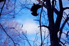 In Flight (JCent8) Tags: park blue trees sky bird nature colors canon fly newjersey flight nj verona jersey centeno