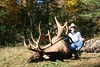 Quebec Elk & Red Stag Hunt 59