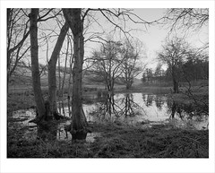 flooded (Nick Moys) Tags: trees landscape flood norfolk ilfordhp5 bronicaetrsi 320asa moerschfinol 40mmzenzanonmclens cockthorpecommon