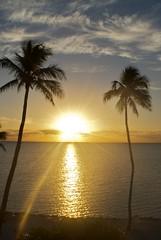 Sunrise (HaleyWilke) Tags: ocean sky tree beautiful sunrise warm florida palm