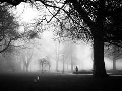 stealing souls (bluechameleon) Tags: city trees winter urban blackandwhite bw woman birds silhouette fog vancouver day moody path branches eerie lamppost vancity bluechameleon artlibre sharonwish bluechameleonphotography