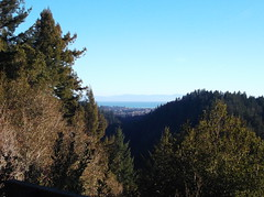 Lookout Point, Henry Cowell Redwoods State Park