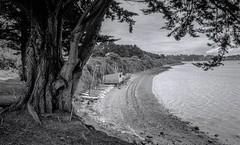 Golfe du Morbihan, B&W, 11 (Patrick.Raymond (2M views)) Tags: bretagne morbihan golfe mer plage argentique tmax nikon expressyourself