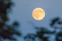 Early evening full moon rising (Frank (NianticPhoto)) Tags: cloads fullmoon glow rising frankoller nikond7100 nikon80400mmf4556g