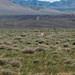 Toin, toin: gazela-de-rabo-preto