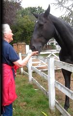 Pleased (ohange2008) Tags: blackhorse