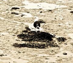 Mouette  Cancale (Alexia Thirion) Tags: bretagne cancale britain port harbor phare headlight mer sea vacances holidays mouette seagull