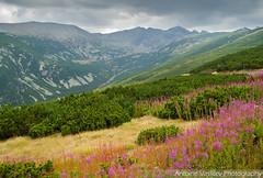 Връх Мусала / Musala Peak (AVasilev) Tags: мусала връх рила планина musala peak rila mountain