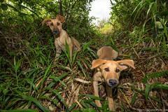 17. Matagalpa-8.jpg (gaillard.galopere) Tags: 2016 5d 5dmkiii apn america amrique animaux canon continentsetpays couleur ef eos mkiii matagalpa ni nic nicaragua travel ameriquecentrale anne canonphotography chien color colorful dog green perro verde vert