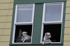 Windows 12 - view 11 (DepictingPhotos) Tags: windows dogs sunglasses alaska