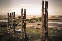 Coastal Corrosion. (Ian Emerson (Looking forward to a Scotland trip)) Tags: coast beach staudries somerset corrosion groyne moss ironwork rusty wood rocks pebbles sand seaweed historic