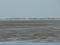 mudflat and Norderney dunes (achatphoenix) Tags: nessmersiel baltrum mud mudflat watt water wasser wattenmeer waddensea waterscape nordsee northsea island insel ostfriesischeinseln ostfriesland ebbeflut gezeiten tidal tide ferry