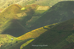 Y9533.0916.Xm Vng.Bc Yn.Sn La (hoanglongphoto) Tags: asia asian vietnam northvietnam northwestvietnam outdoor landscape scenery morning sunlight sunnymorning mountain flank terraces terracedfields terracedfieldslandscape terracedfieldsinvietnam terracedfieldsinxinvang mountainouslandscape mountainscene canon canoneos1dx canonef70200mmf28lisiiusmlens tybc snla bcyn xmvng ngoitri phongcnh buisng nng nngsm ni sierra dyni dale thunglng snni harvest rungbcthang lachn magt phongcnhvngcao rungbcthangxmvng phongcnhsnla phongcnhtybc