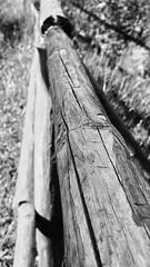 legno (elenasavino) Tags: montagna sentiero legno wood