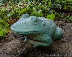 264366  21 September 2016  our yard frog (Doug Churchill) Tags: 365 366 sonyrx100m3 project project366