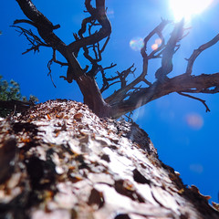 Branches of 1 Life! (Douglas H Wood) Tags: life tree coconino arizona soul age wisdom