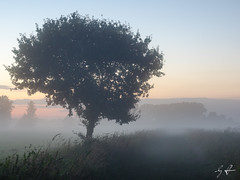 GST01660 (Gordon Stver) Tags: landscape germany tree fog sunset