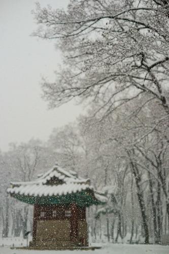 Focused Snow (Daniel Smukalla) park snow tree temple 50mm raw gloomy cloudy sony traditional korea korean seoul southkorea generation generationgap  sal50f14 seolleung  sal50 seollung  imagedataconverter  sedaechai sonya99 sedahechai