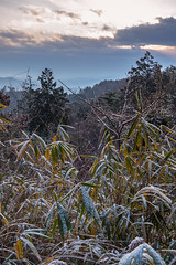PhoTones Works #2204 (TAKUMA KIMURA) Tags: trees winter plant nature leaves clouds landscape       kimura    takuma   rx100 photones