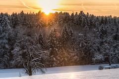 winter in Winterthur (picture 4B) Tags: schnee winter sunset sun sunlight snow forest sonnenuntergang kalt sonne wald gegenlicht abendsonne winterthur klte sonnenlicht eschenberg sonya77 sonya77v