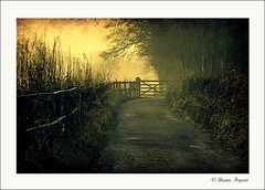 End of the road... (Shaun Argent) Tags: nature yorkshire lane northyorkshire ripon littlethorpe riponcanal