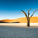 "Deadvlei Sossusvlei Namibia • <a style=""font-size:0.8em;"" href=""https://www.flickr.com/photos/21540187@N07/8291684967/"" target=""_blank"">View on Flickr</a>"