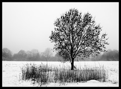 Christmas Tree (Feldore) Tags: park christmas white mist snow black tree london fog reeds mchugh barnet feldore
