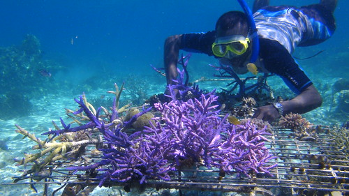 Rural coral farming project in Western Province, Solomon Islands. Photo by Wade Fairley, 2012.