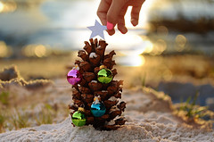 all creatures great and small (Laurarama) Tags: beach backlight star sand hand bokeh fingers christmastree ornaments backlit pinecone nailpolish notsnow odc onthecusp nikkor55mmf28aismicro nikond7000 laurarama