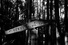 Sign Falling Apart (Reptilian_Sandwich) Tags: wood wild summer bw plants mountains newmexico green leaves sign forest vintage walking outdoors solitude shadows decay board carving solidarity marker weathered manualfocus eveninglight filteredlight cresttrail blackrange