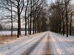 Almelo (2010) (l-vandervegt) Tags: winter snow holland netherlands sneeuw nederland twente overijssel 2010 almelo gravenallee