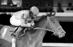 2012-11-01 (70) r5 Antonio Lopez on #1 Cinderella'spalace (JLeeFleenor) Tags: horses bw caballo cheval blackwhite uma cal westvirginia jockeys horseracing lopez cavallo cavalo pferd equestrian kin kuda alogo equine hest thoroughbreds soos hevonen cuddy paard cavall kon koin 馬 hast charlestownraces häst ceffyl лошадь 马 koń faras hestur סוס perd thoroughbredracing حصان konj кон άλογο घोड़ा capall beygir yarraman pfeerd