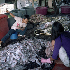 (*YIP*) Tags: boy food fish industry 120 6x6 film girl kids mediumformat square photography asia factory malaysia processing seafood epson freshness kualaselangor kiev60 manufacturing iso160 colorimage v500 sekinjang epsonv500 yipchoonhong