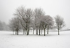 Pretty Cluster of Trees on a Cold Winter Day - Dundee Scotland (Magdalen Green Photography) Tags: snow scotland dundee snowing tayside wintry scottishwinter calmnaturescene iaingordon snowindundee prettyclusteroftreesonacoldwinterday magdalengreenphotography0454