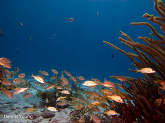 Chaos (dlyoung) Tags: fall wildlife scuba bonaire flowersplants redslave shoredive divetype