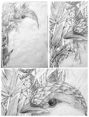 . (Vicky Ruz Daz) Tags: gris plantas selva palmeras pajaros verano tropical pajaro dibujo ilustracion grafito hibrido