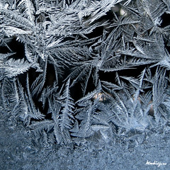 Crystal Fronds - Frondes de crystal (monteregina) Tags: morning windows winter sun canada abstract macro art ice window nature water glass colors closeup droplets eau frost crystals couleurs fenster hiver details natur sparkle textures qubec designs condensation abstraction transparent ferns eis fentre sparkling formations icecrystals glace givre matin jackfrost eisblumen fougres vitre frostedglass gouttes abstrait iceart eiskalt kristalle cristaux iceflowers frostflower eiskristalle frostywindow icepatterns monteregina icecolors fentregivre motifsdeglace crystalsdeglace frostycrystals frondsinice
